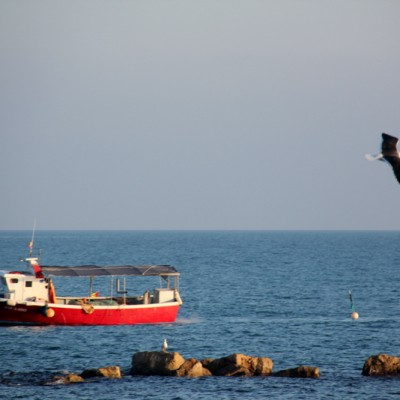 Vinaros Fishing Boat Followed by Bird