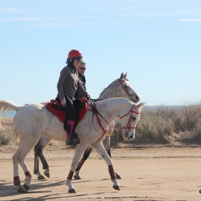 Horse riding in Delta de l'Ebre Park