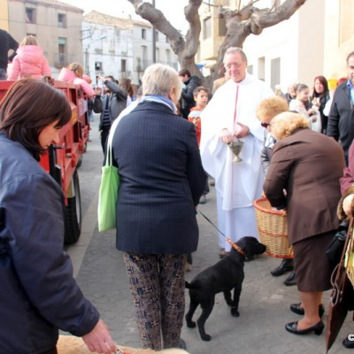 Sant Rafael del Riu St. Anthony Priest Blessing Animals 2015