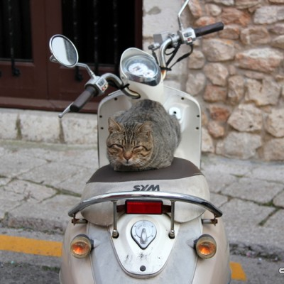 Sitges cool cat on a bike
