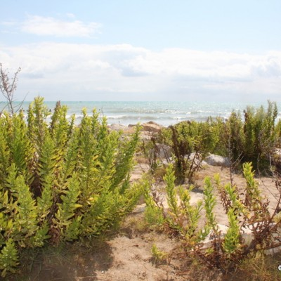 Torrenostra Torreblanca Plants by Sea