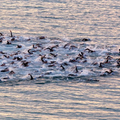 Triathletes swim on start of the Ironman triathlon competition at Calella beach, May 18, 2014 in Calella, Spain ed1