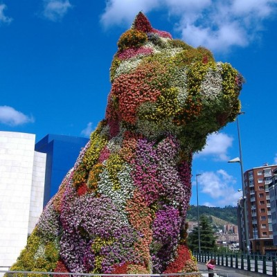 Bilbao Spain Puppy