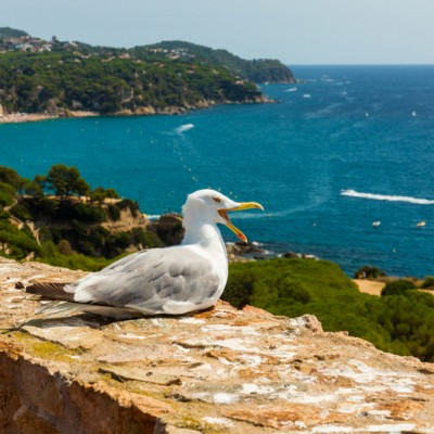 Lloret de Mar Views From A Seagull's Perspective