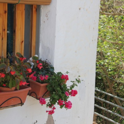 La Galera flower window boxes