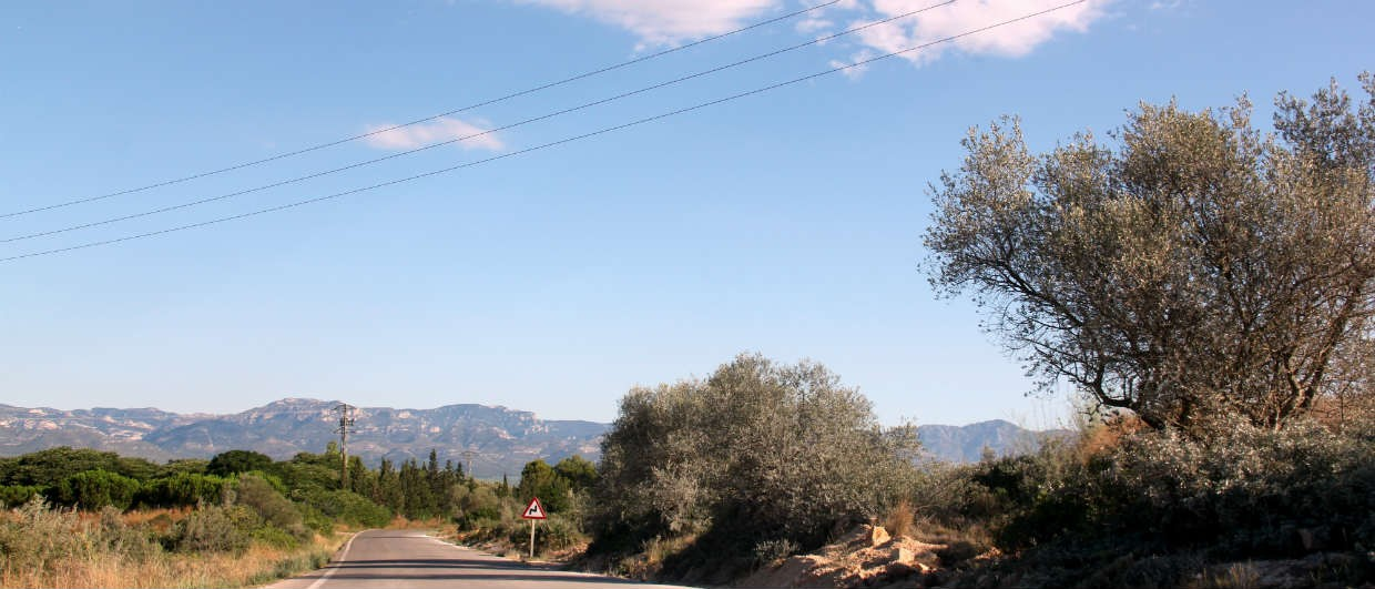 Olive trees on road to La Miliana and then onto La Galera