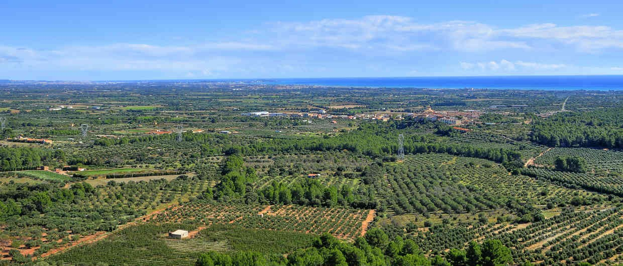 Mont Roig del Camp Olive Groves and Sea Catalonia-1