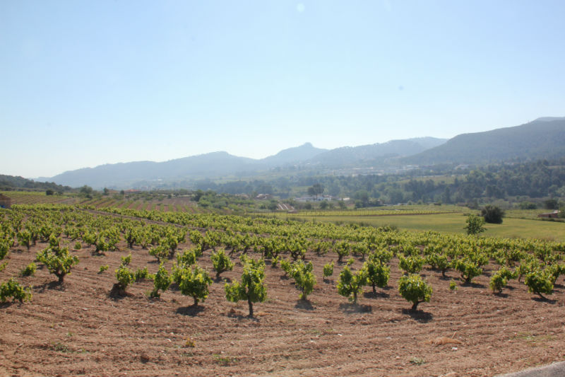 Wine routes Catalonia Penedes-1